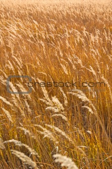 Autumn field grass