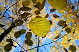 Beautiful autumn leaf