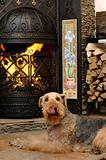 dog sit near the fireplace
