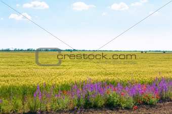 Beautiful summer field.