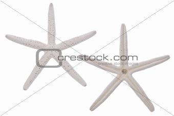 Pair of White Starfish