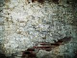 the cracks of the brick walls
