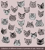 Set breeds of portraits of cats. Vector