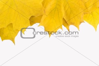 Autumn card of colored leafs frame over white back