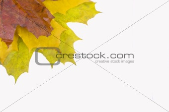 Autumn card of colored leaves frame over white back