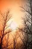 Leafless trees against the winter dusk background