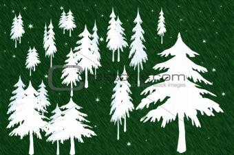 Green Forrest of White Fir Trees
