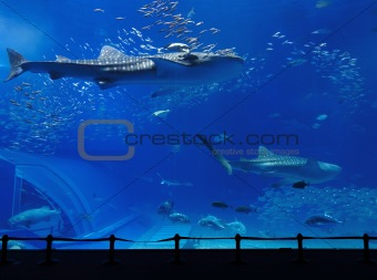 aquarium tank with whale shark