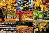 Golden autumn in pictures