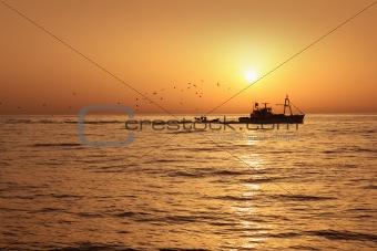 Fisherboat professional sardine catch fishery sunrise