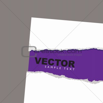 torn paper reveal purple