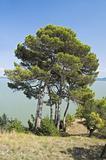 Castiglione del Lago. Umbria.