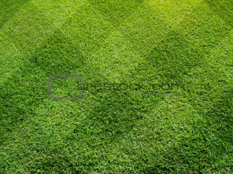 Top view of Beautiful fourty five degree square tone lawn