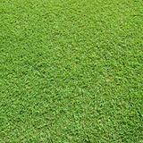 lawn in a square