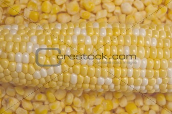 Fresh and Frozen Corn