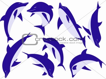 animal dolphins