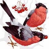 Vector bullfinch and ashberry