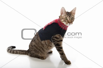 Cat in a Christmas Sweater
