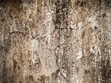 cement plaster wall