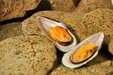 New Zeland Greenshell Mussels