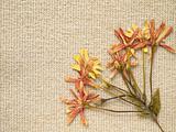 pressed dry flowers