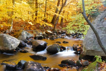 Autumn foliage and creek