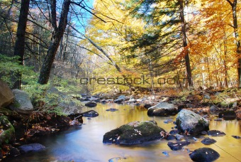 Autumn woods with creek
