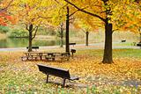 Autumn foliage in park by lake
