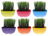 Set of 6 Vibrant Grass Filled Bowls