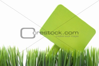 Blank Green Sign in Fresh Grass