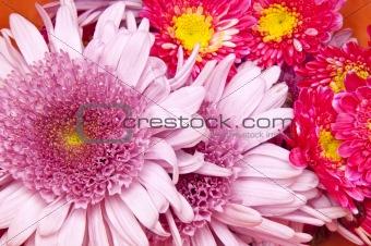 Beautiful Flower Background Image