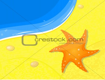 fishstar on sand near sea