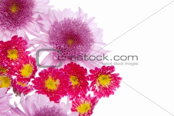 Beautiful Flower Border Image
