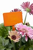 Pink Daisies with Blank Orange Sign