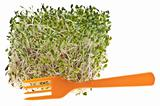 Eating Healthy Alfalfa Sprouts