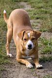 Kneeling doggy