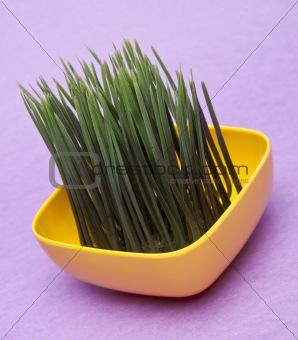 Bright Green Grass