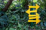 Yellow Signs in the Forest