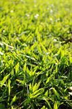 green grass background, low angle view