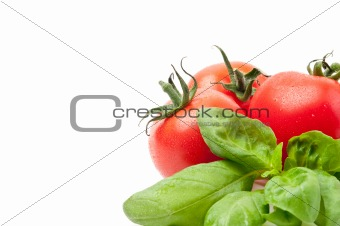 Tomato / basil