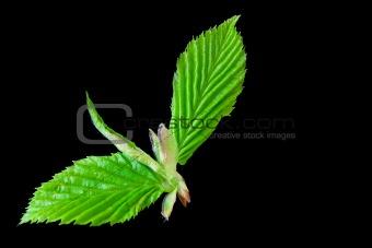 Green landing