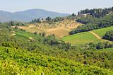 Hill Of Tuscany