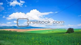 oil-seed field