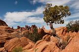 Tree at Arches National Park