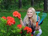 Pretty gardener woman with red flower bush and gardening tools o
