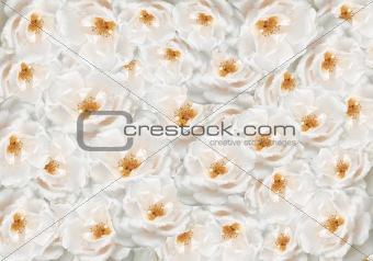floral rose flower backdrop
