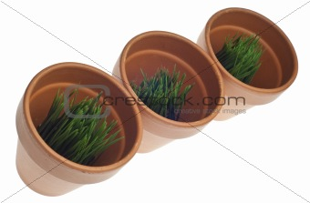 Green Grass in Clay Pots