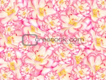 floral flower textured background, pink white and yellow