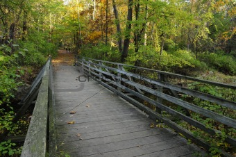 A foot bridge in the forest