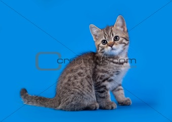 Cat  on blue background